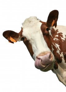 Grass-Fed Beef is Better For You and The Environment
