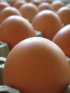 Egg Preparation Safety