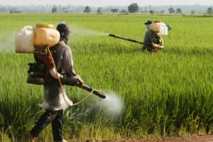 Pesticide-Induced Brain Toxicity