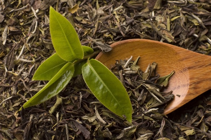 green tea extract benefits