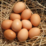 Eggs: The Superfood We Adore