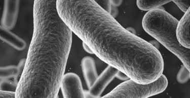 Boost-Your-Immune-System-With-Bacteria